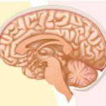 認知症検査入院と画像検査について